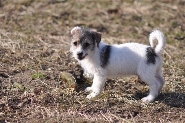 Hundevermittlung Hundshuus, Vermittlungshunde im Internet,Ratgeber ...